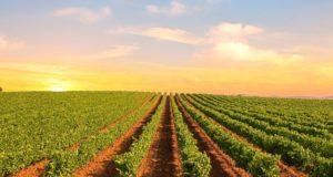 melhores vinhos do Alentejo
